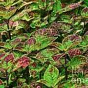 Green And Purple In Nature Poster