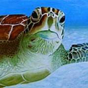 Green Back Turtle Poster by David Hawkes