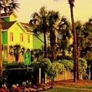 Green Beauty At Isle Of Palms Poster