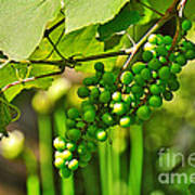 Green Berries Poster by Kaye Menner