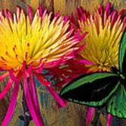 Green Butterfly On Fire Mums Poster