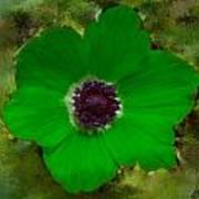 Green Calanit Magen Poster