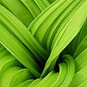 Green Folds Poster