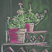 Green Geraniums Poster by Marcia Meade