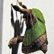 Green Hair Moth Poster