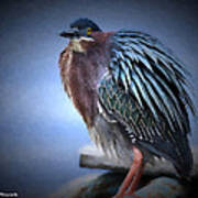 Green Heron Vignetted  Poster