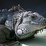Green Iguana 1 Poster