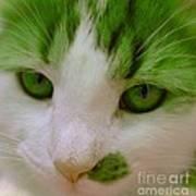 Green Kitten Poster