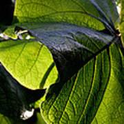 Green Leaf I Poster