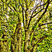 Green Leafy Trees Poster