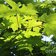 Green Leaves Canvas Poster