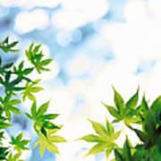 Green Leaves On Mottled Cloudy Sky Poster