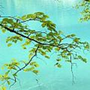 Green Leaves Over Blue Water Poster