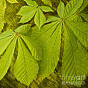 Green Leaves Series Poster by Heiko Koehrer-Wagner