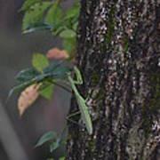 Green Mantis Poster