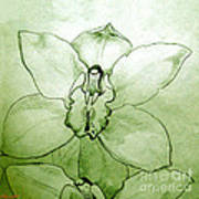 Green Orchid Poster by Patricia Howitt