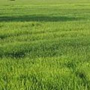 Green Paddy Fields 1 Poster