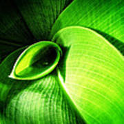 Green Paradise - Leaves By Sharon Cummings Poster