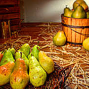 Green Pears In Rustic Basket Poster by Olivier Le Queinec
