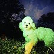 Green Poodle Poster