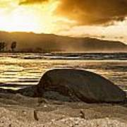 Green Sea Turtle At Sunset V2 Poster
