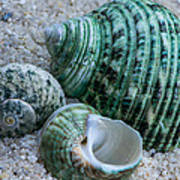 Green Seashells Poster