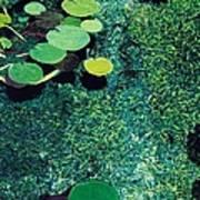 Green Shimmering Pond Poster