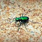 Green Tiger Beetle Poster