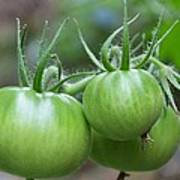 Green Tomatoes Poster