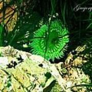 Green Urchin Poster