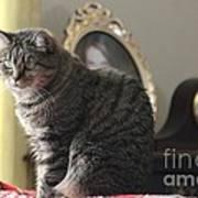 Greeting Card Cat Poster