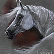 Grey Arabian Horse Soft Pastel Drawing 13 04 2013 Poster