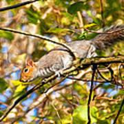 Grey Squirrel - Impressions Poster