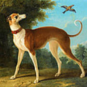 Greyhound In A Landscape Poster