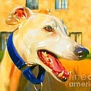Greyhound Painting Poster by Iain McDonald