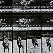 Greyhound Running Poster