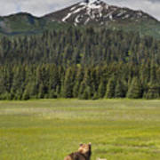 Grizzly Bear Mother And Cubs In Meadow Poster