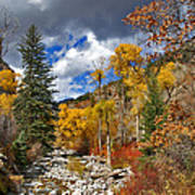 Grizzly Creek Cottonwoods Poster