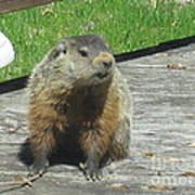 Groundhog Holding A Stick Poster