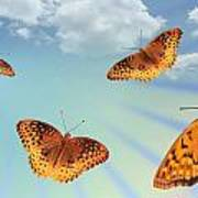 Group Of Butterflies And Sky Poster