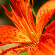 Growing Flame Poster by Kim Lagerhem