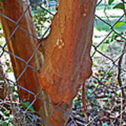 Growing Through The Fence Poster