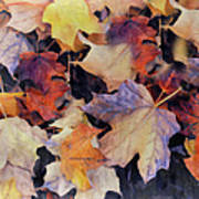 Grungy Autumn Leaves Poster