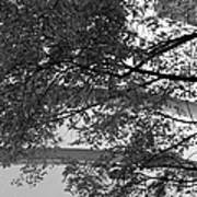 Guggenheim And Trees In Black And White Poster