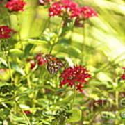 Gulf Fritillary Butterfly Poster