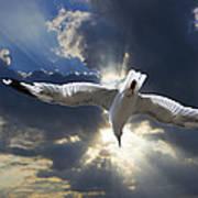 Gull Flying Under A Radiant Sunburst Poster