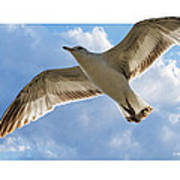 Gull - Out Of Bounds Poster