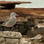 Gull Wall Poster