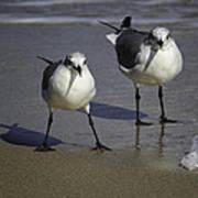 Gulls On The Beach Poster