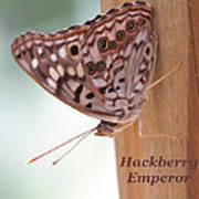 Hackberry Emperor Poster
